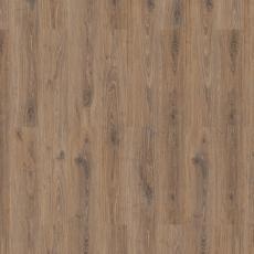 woodstock praline